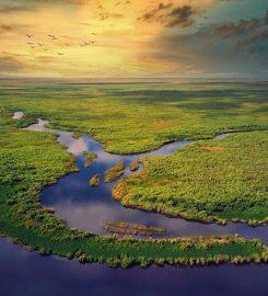 The Disney Wilderness Preserve